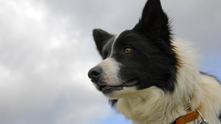「超能力?そてとも霊感?」犬の第六感について