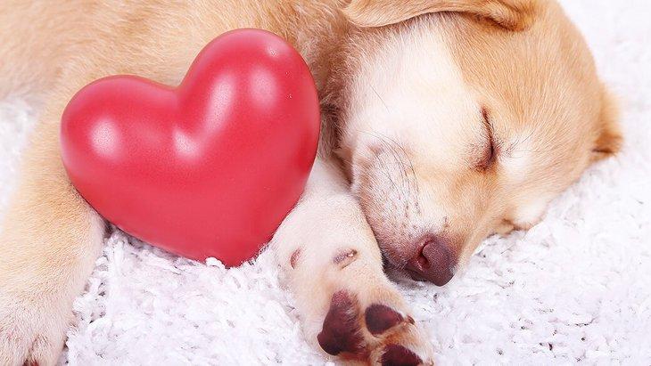 犬のしぐさで愛され度がわかる!6つの愛情表現