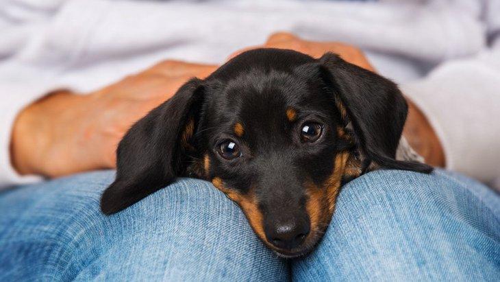 犬が人の足に顔を埋める心理5選