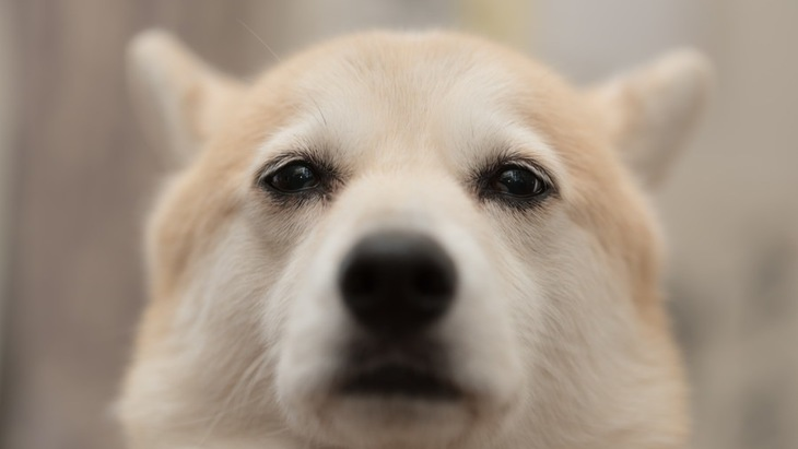 犬が助けを求めている時の仕草や行動5つ