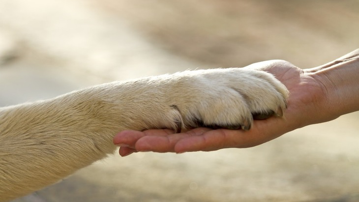 老犬介護をする心構えと用意しておきたいモノ