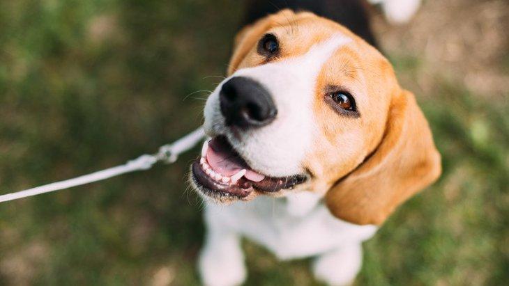 犬が飼い主に『期待』している時の仕草や行動5つ