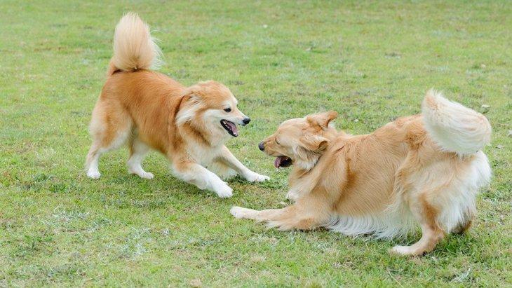 『ドッグランに行かない方がいい犬』の特徴4選