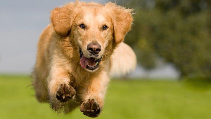 犬の老化を防止することはできる?