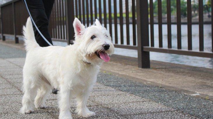 犬が散歩中にしやすい怪我4つ!必ず愛犬に気をかけながらのお散歩を!