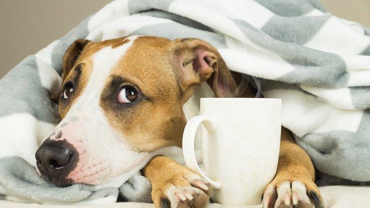 なぜ犬は寒がりな子が多いの?