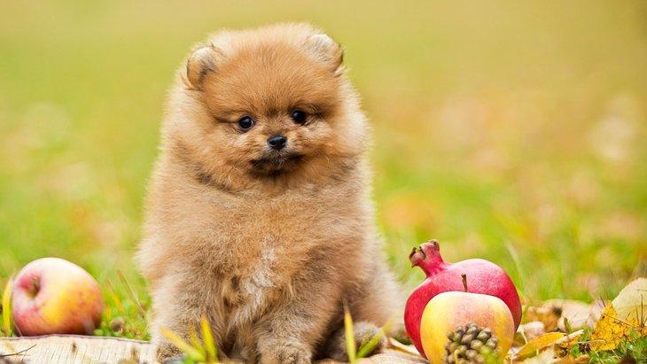 犬にNGな『秋の食べ物』4選