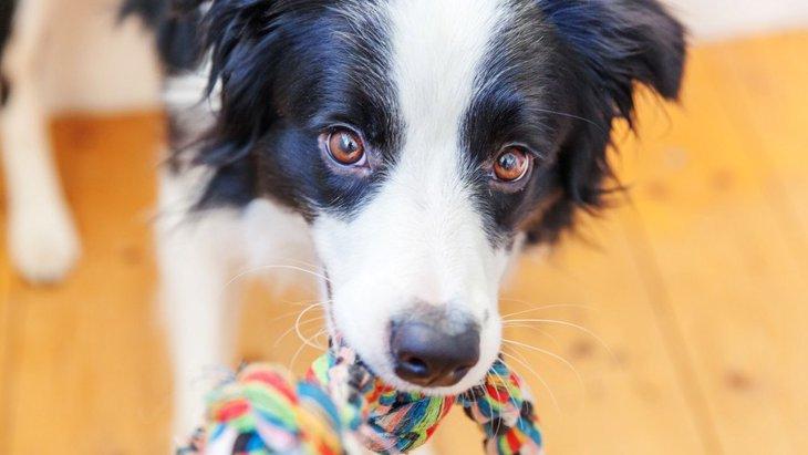 犬が人に向かって見せる『遊ぼうよ!サイン』5選