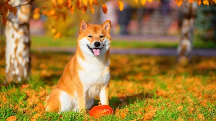 犬を『甘やかす』のと『愛情を与える』のには違いがある?