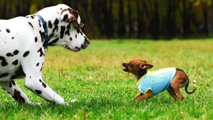 犬が喧嘩してしまうのはなぜ?止めたほうがいい?