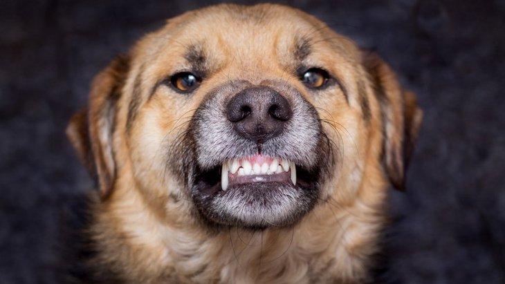 犬が飼い主のことを『本気噛み』してくる時の心理3選!やめさせるには?