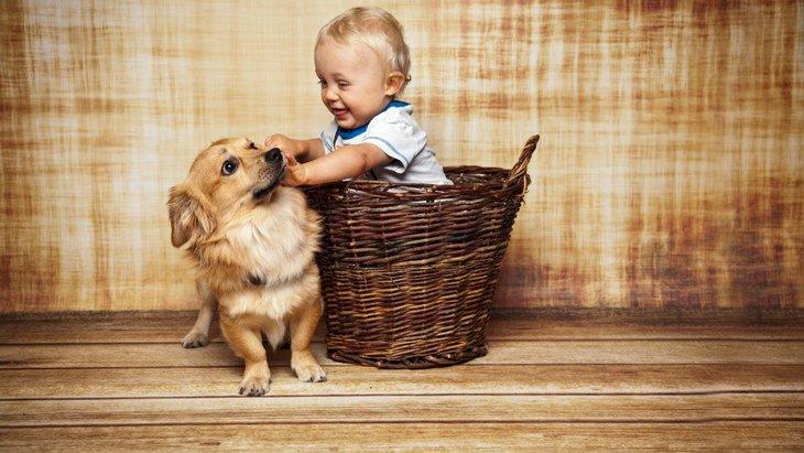 犬が『撫でても喜ばない』時に考えている4つのこと 喜んでもらうためには?