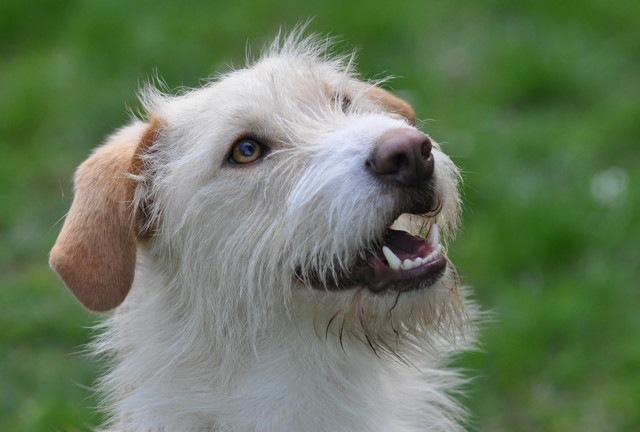 犬に対して使ってしまう『わんちゃん言葉』についての嬉しい研究結果
