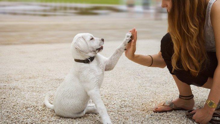 子犬しつけ教室はのちの行動にどんな影響を与えるか?【研究結果】
