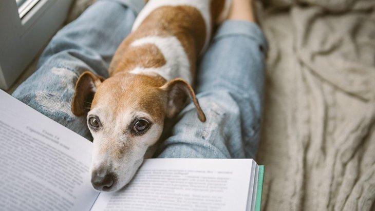 犬に本を読み聞かせたい!愛犬を『読書介助犬』に育てる7つのステップ