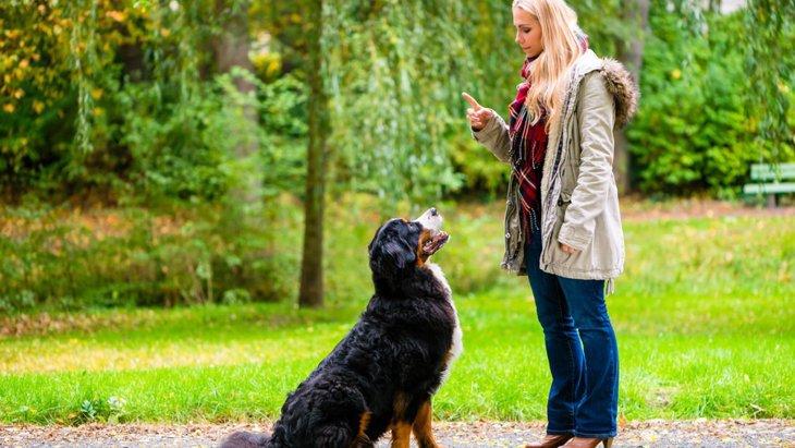 犬のしつけで使うジェスチャーのやり方と覚えておきたいコツ