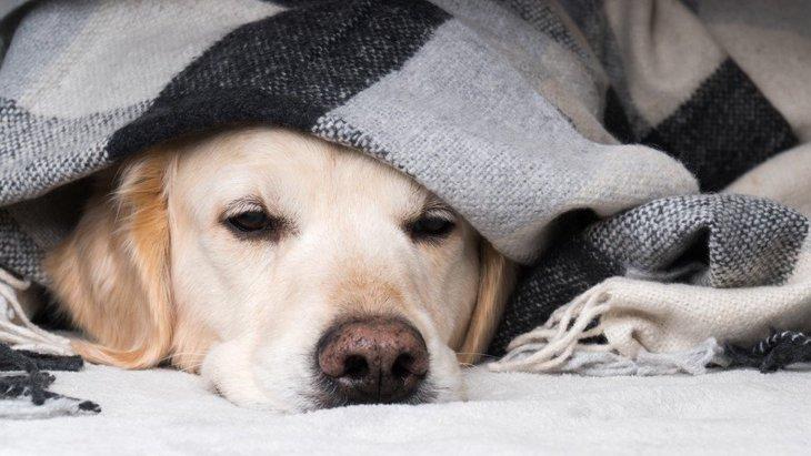 犬をすぐに病院に連れて行くべき『危険な症状』6選