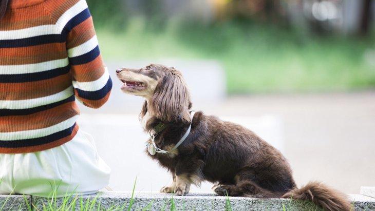 周りにいない?『迷惑な犬の飼い主』の共通点5選