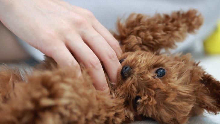 犬が留守番を嫌がっている時に見せる仕草や行動3選
