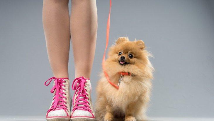 愛犬にマナーは身についてる?「グッドシチズンテスト」とは