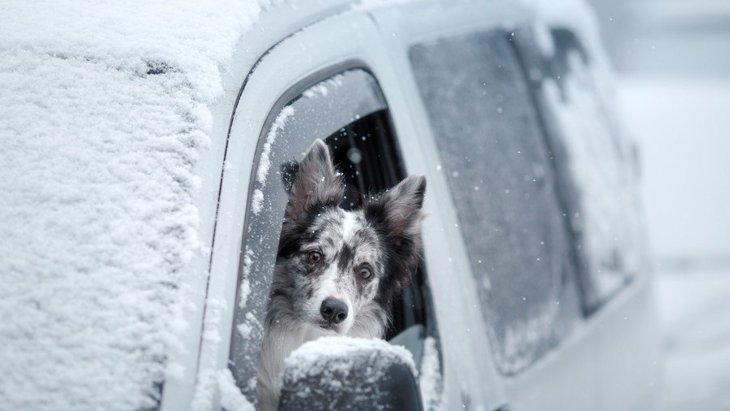 冬は犬を車にお留守番させても大丈夫?