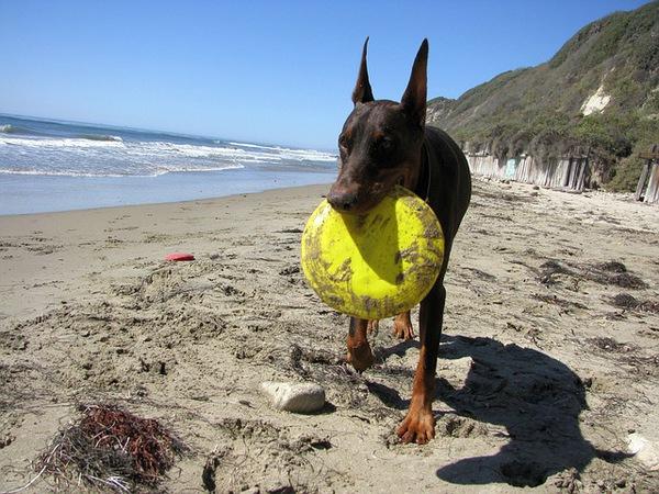愛犬とフリスビーやキャッチボールを楽しもう!