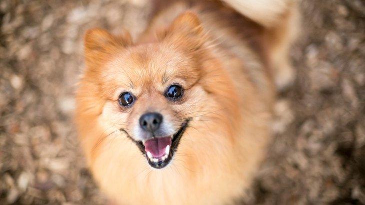 犬が人の話を聞いている時にする仕草5つ