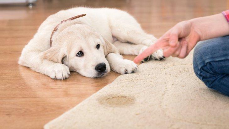 愛犬が突然おしっこを失敗するように…考えられる理由や原因、その対処法について