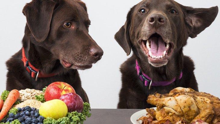 犬に手作りごはんを与えるメリットとデメリット
