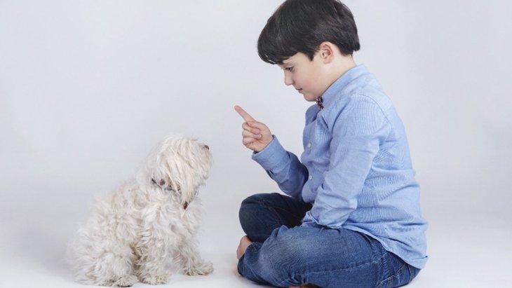 犬にしてはいけない『叱り方』がある!?5つのNG行動と正しい叱り方