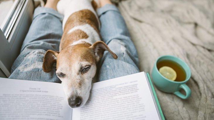 犬が飼い主にくっつき続ける時の心理6つ