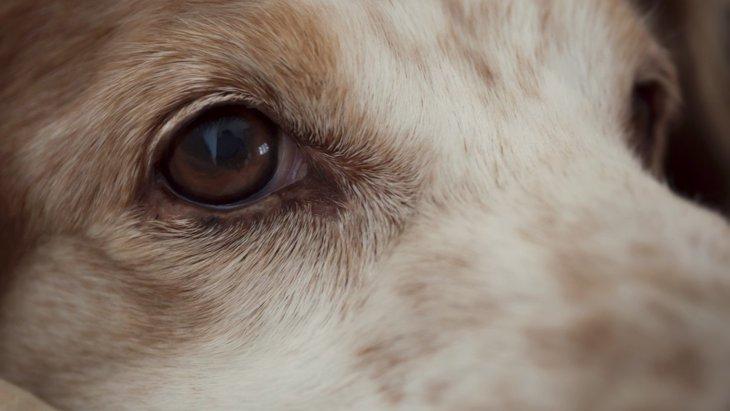 犬の『超危険なサイン』7選!見逃すと怖い病気の症状とは?