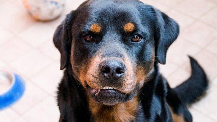 『独占欲が強い犬』の特徴3選!愛犬はこんな仕草や行動をしていませんか?