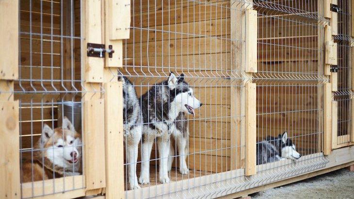 犬の保護団体って具体的には何をしているの?