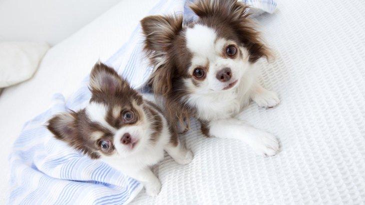 犬が犬にしている『大好き♡サイン』3選!犬同士で行う愛情表現とは?