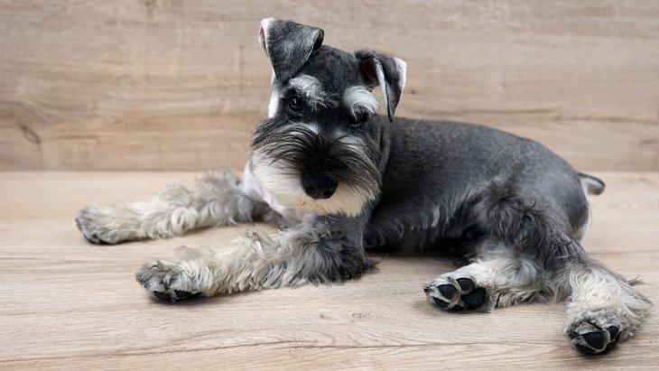 体臭が少ない犬種13選
