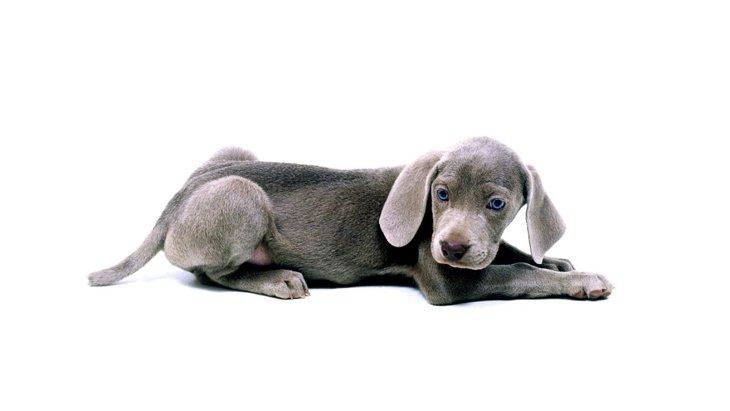 『ネガティブな犬』の特徴3選