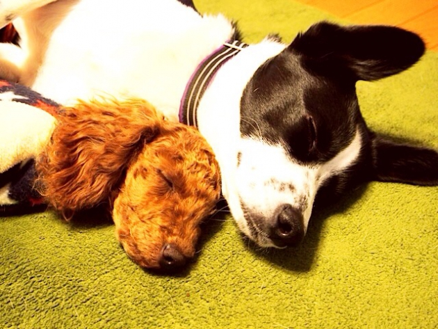 犬のお留守番は何時間までが理想的?