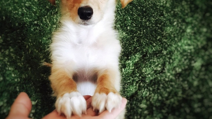 犬が前足で「おいでおいで」ポーズをする3つの心理