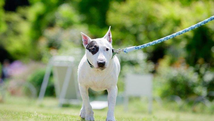 犬の飼い主に必要な「8つの条件」