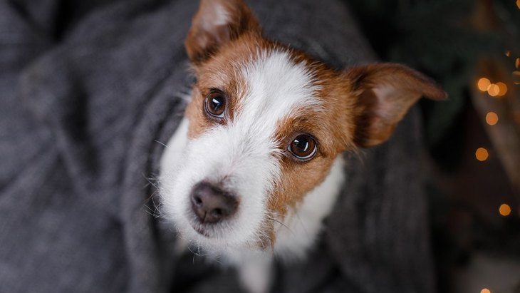 犬にNGな『待て』のやり方4選!こんなマテは愛犬を苦しめているかも…?