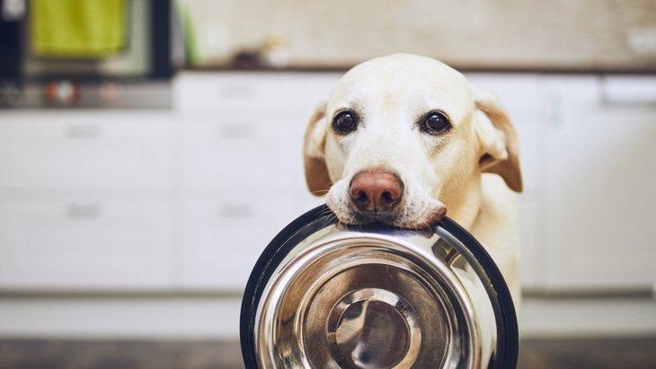 犬が『お腹すいている時』によくする仕草や行動3選