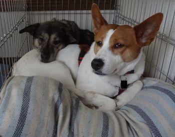 初めて保護センターから怖がりの犬を迎え入れ。先住犬とも仲良しに