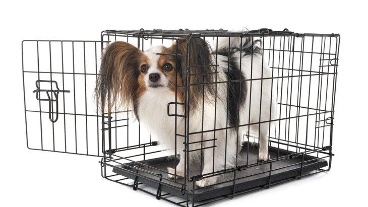 犬のケージの人気商品ランキングTO4!特徴や選び方など