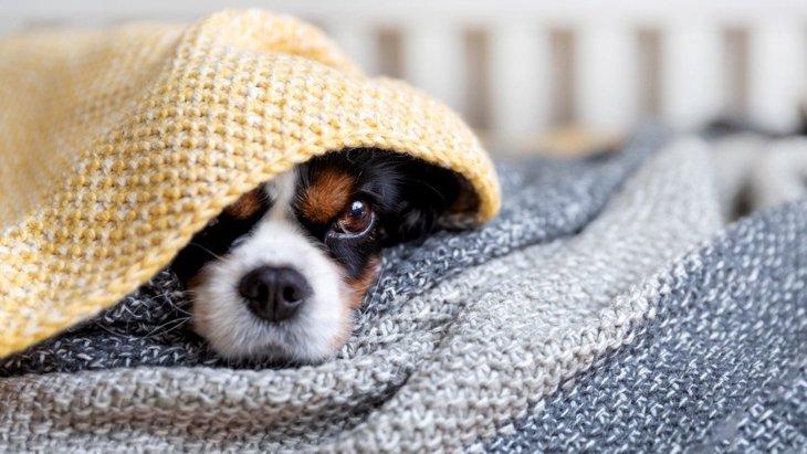 犬が『フカフカした場所』を好む理由4選