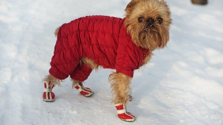 犬の靴を履かせるべき時・履かせない方が良い時