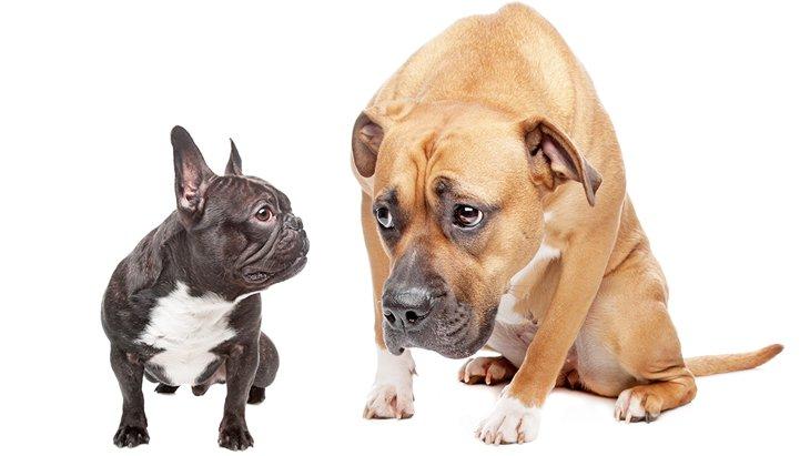 怖がり癖のある犬と一緒に暮らすための工夫