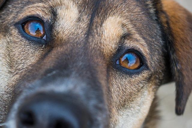 犬は人間の「嬉しい顔」を脳でしっかりと認識している!【研究結果】