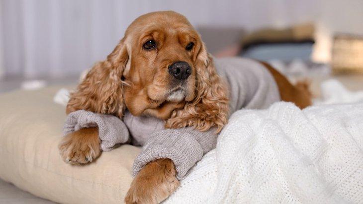 乾燥が犬に与える悪影響7つ