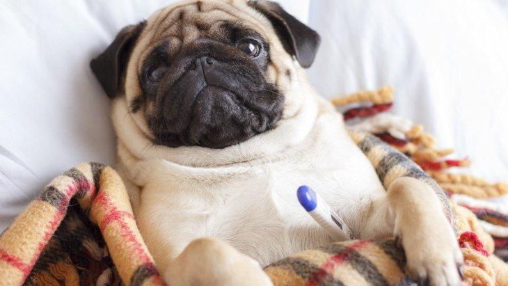 犬が『仮病を使うタイミング』とは?仮病をする心理からやりたい対応まで解説